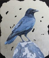 clive-meredith---common-crow-cm001