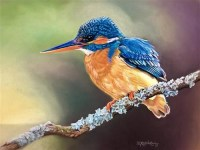 samantha-greenhill---kingfisher