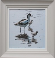 clive-meredith---avocet